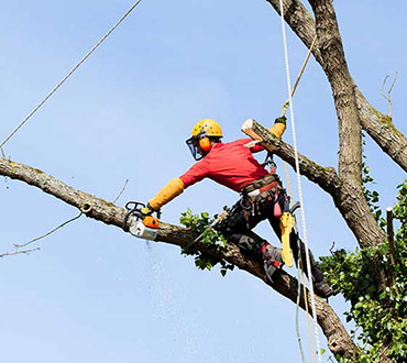 tree felling or removal sunshine coast